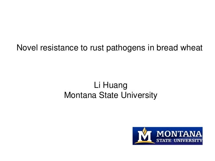 Novel resistance to rust pathogens in bread wheat                  Li Huang            Montana State University