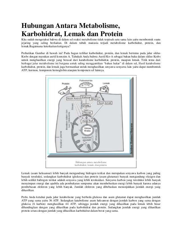 Hubungan Antara Metabolisme, Karbohidrat, Lemak dan Protein Kita sudah mengetahui bahwa di dalam sel reaksi metabolisme ti...