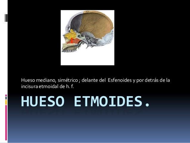 Hueso mediano, simétrico ; delante del Esfenoides y por detrás de laincisura etmoidal de h. f.HUESO ETMOIDES.