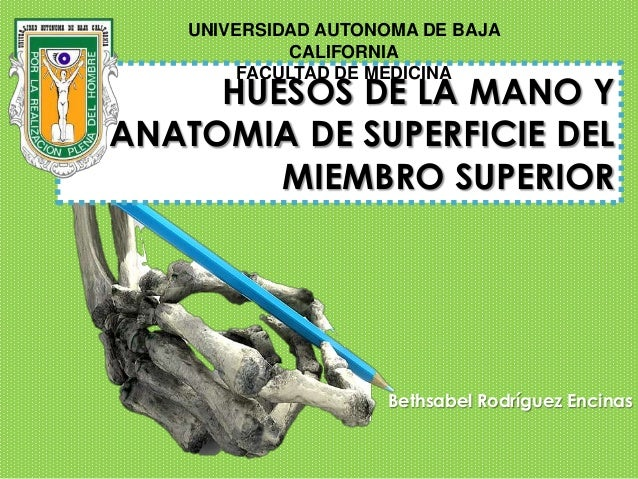 UNIVERSIDAD AUTONOMA DE BAJA             CALIFORNIA         FACULTAD DE MEDICINA     HUESOS DE LA MANO YANATOMIA DE SUPERF...