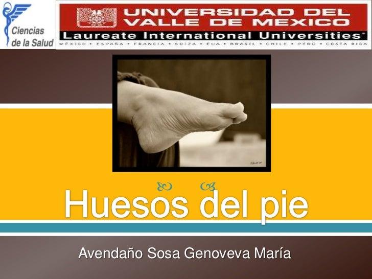 Huesos del pie<br />Avendaño Sosa Genoveva María<br />