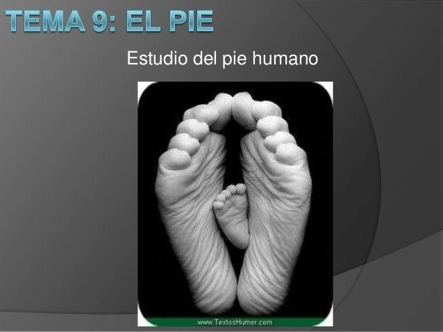 Estudio del pie humano