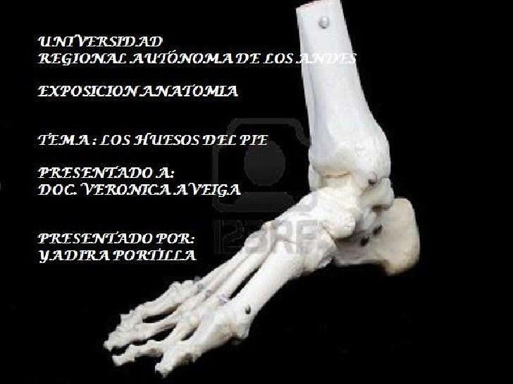 HUESOS DEL PIEEl pie se compone al igual que la mano por 3grupos de huesos ,que forman eltarso, metatarso y las falangesDi...