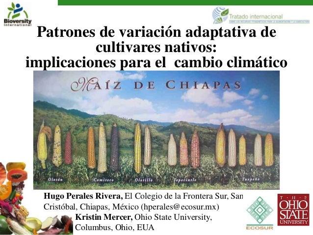 Patrones de variación adaptativa de          cultivares nativos:implicaciones para el cambio climático  Hugo Perales River...