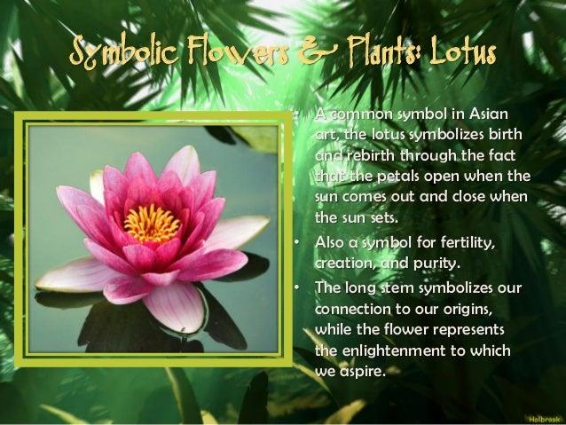 Lotus flower symbolism christianitylotus flower meaning and mythological meanings unmasked decoding the symbolism of myth mightylinksfo