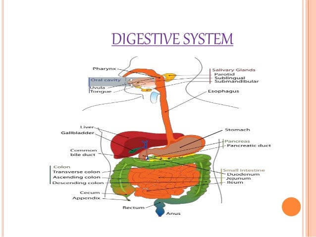 5885292 together with 6353128 besides Digestion And Absorption in addition 5284278 in addition . on large intestine digestion