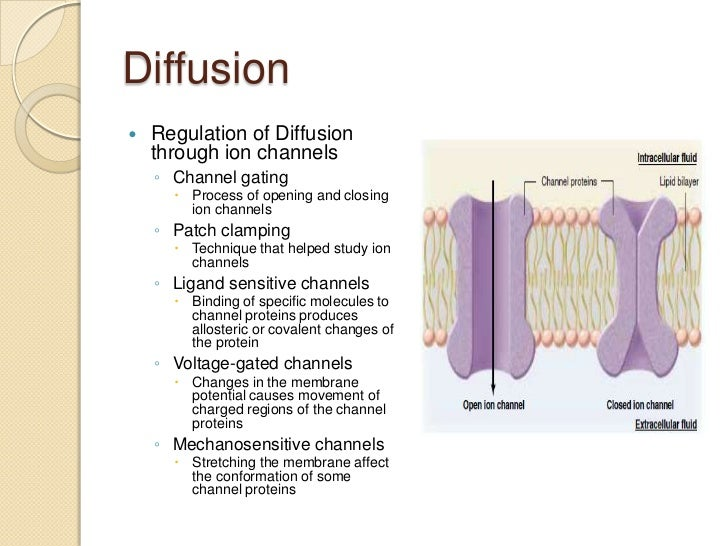 understanding the movement of fluids through diffusion