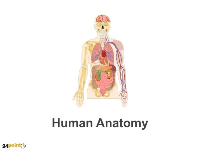 Human Anatomy Insert text here This is dummy text, go ahead and replace it with your own.  Skeleton  Brain