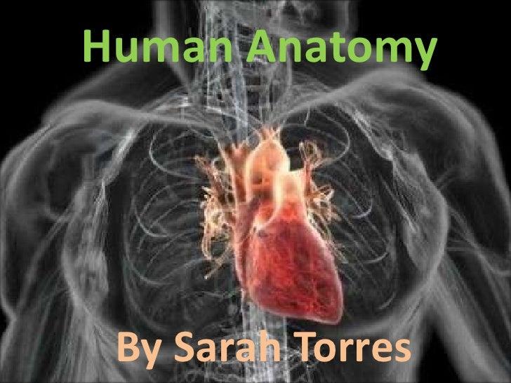 Human Anatomy STORRES 1B