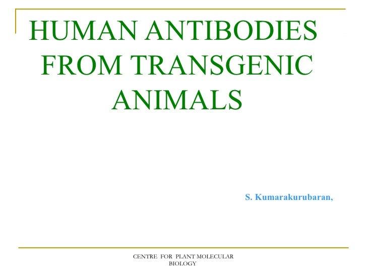 HUMAN ANTIBODIES FROM TRANSGENIC     ANIMALS                                  S. Kumarakurubaran,     CENTRE FOR PLANT MOL...