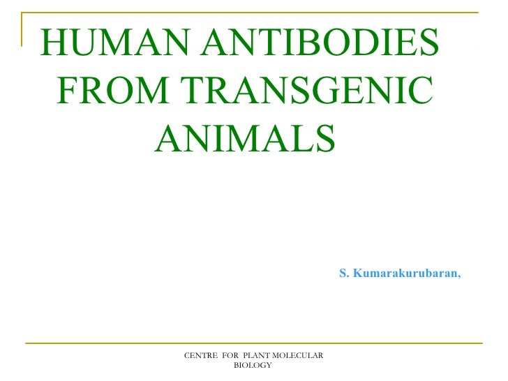 Human antibodies  from transgenic animals