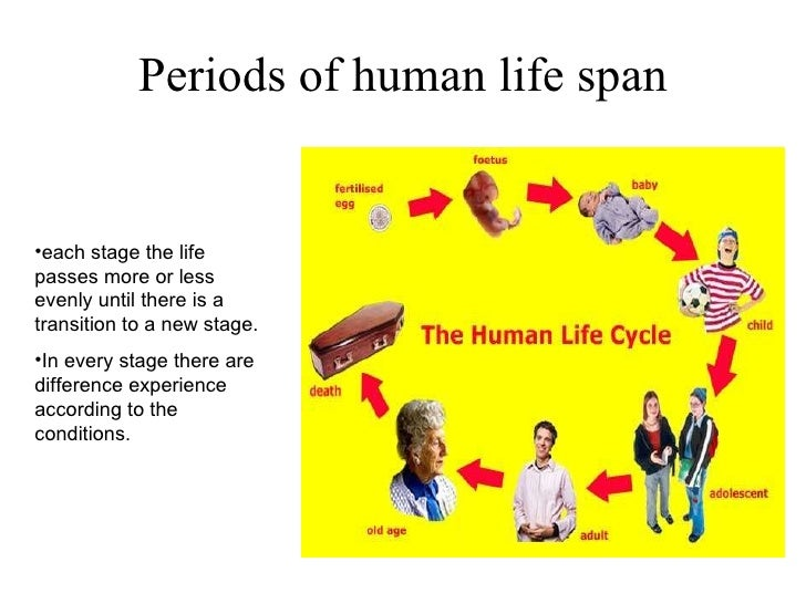 Human life cycle stages ages - photo#7