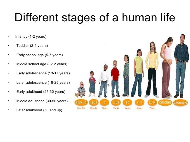 Human life cycle stages ages - photo#1