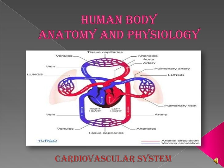  HEART ARTERIES AND VEINS PULMONARY CIRCULATION SYSTEMIC CIRCULATION BLOOD DISEASES