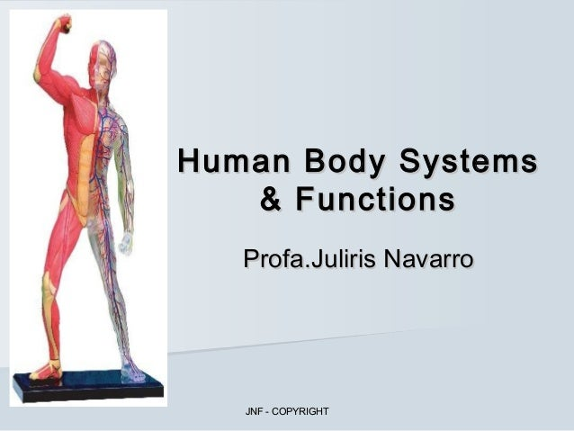 Human body systems & functions