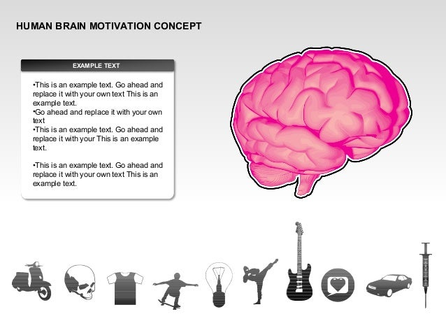 HUMAN BRAIN MOTIVATION CONCEPT EXAMPLE TEXT •This is an example text. Go ahead and replace it with your own text This is a...