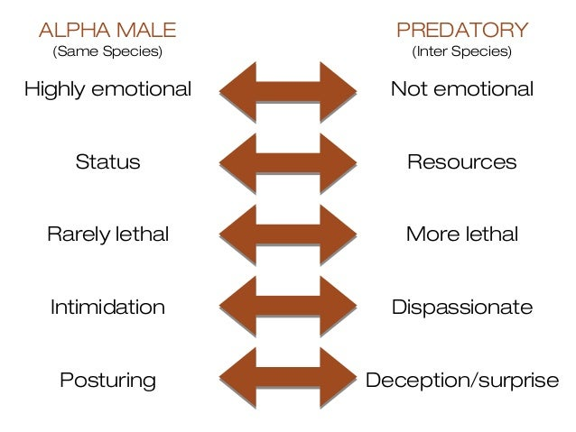 How To Be An Alpha Male | Ten Traits of the Modern Day Alpha - YouTube