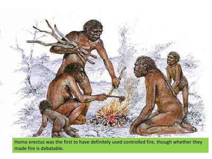 What should i write in a paper about human evolution.?