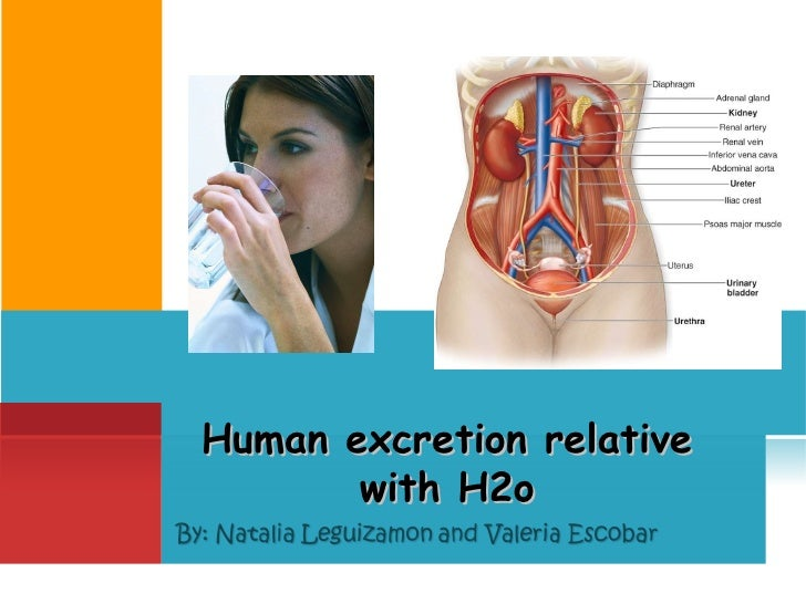 Human excretion relative with H2o