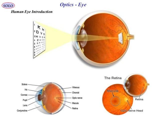 optics of the human eye pdf