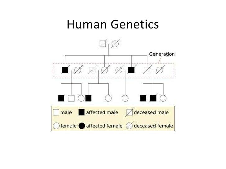 Human genetic inheritance patterns