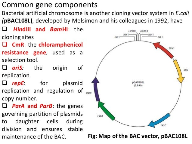 an introduction to the analysis of the human genome project The human genome project was an international scientific effort, coordinated by the us national institutes of health and the us department of energy in 1990, to decode the string of tens.