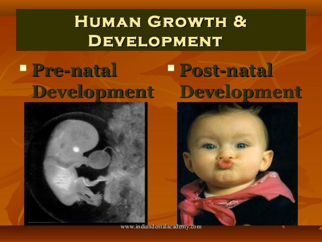 Human Growth and Development II