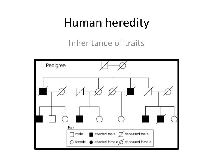 Human heredityInheritance of traits