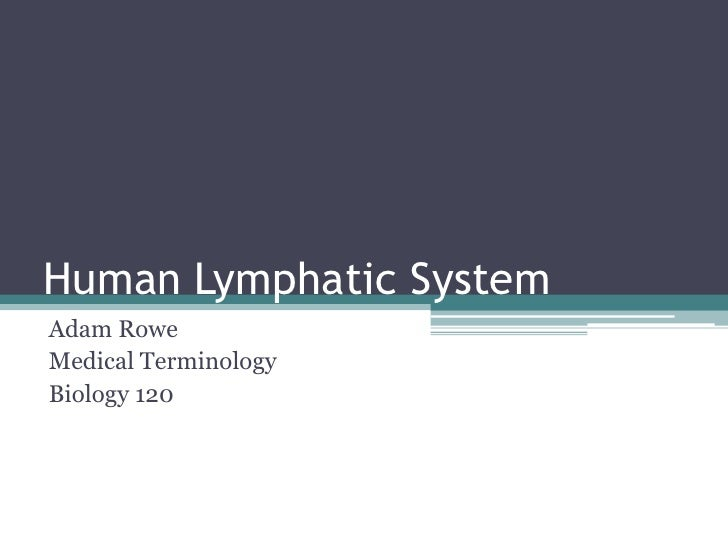 Human Lymphatic System<br />Adam Rowe<br />Medical Terminology<br />Biology 120<br />