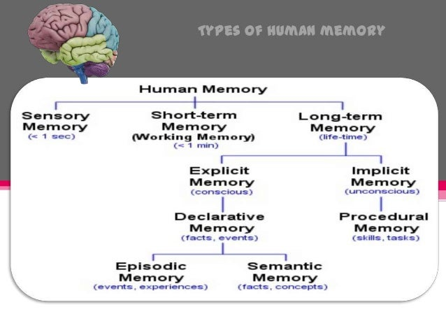 human being memory Scientific research has shown that the human brain starts remembering things from the womb—memory begins to work 20 weeks after conception memory has two components—short term and long term most short-term memories only last 20.