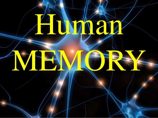how does human memory work pdf