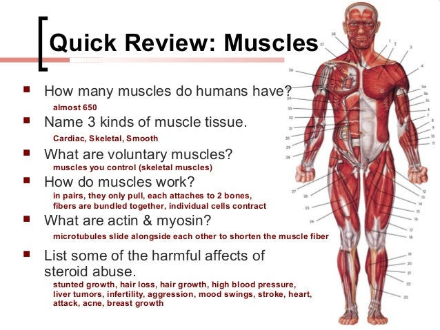 effects of steroids to human body This sample health essay will explore prolonged steroid usage and its effects on the body, as well as the dangers, risks, benefits, and medical usage of steroids.