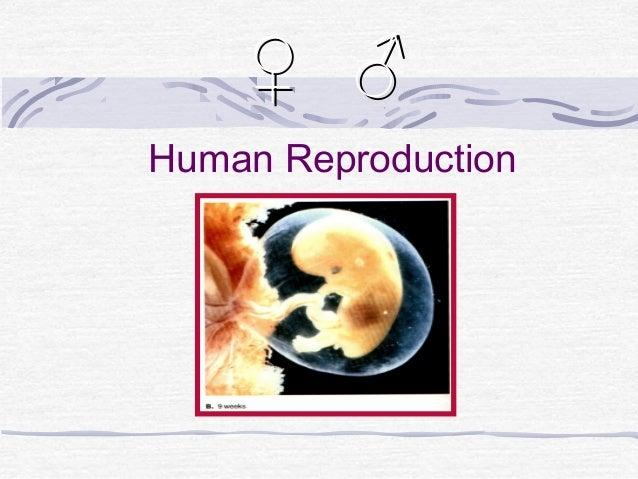 Human Reproduction♀ ♂♀ ♂