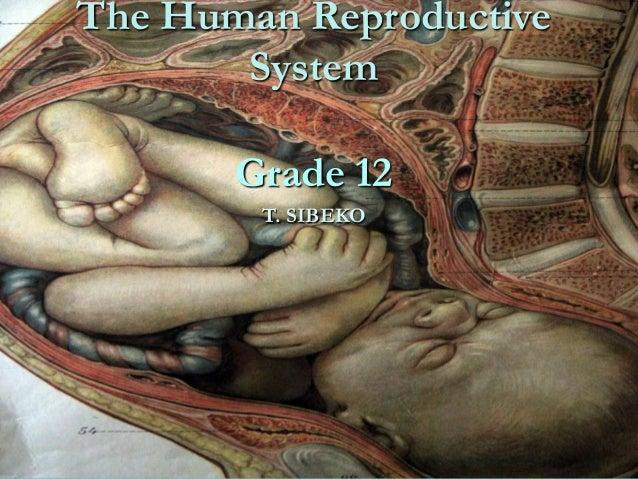 The Human Reproductive System  Grade 12 T. SIBEKO