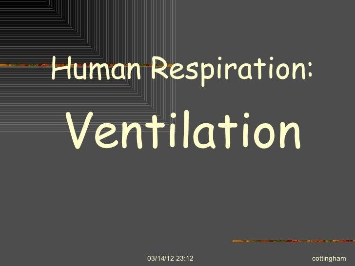 Human respiration ib master