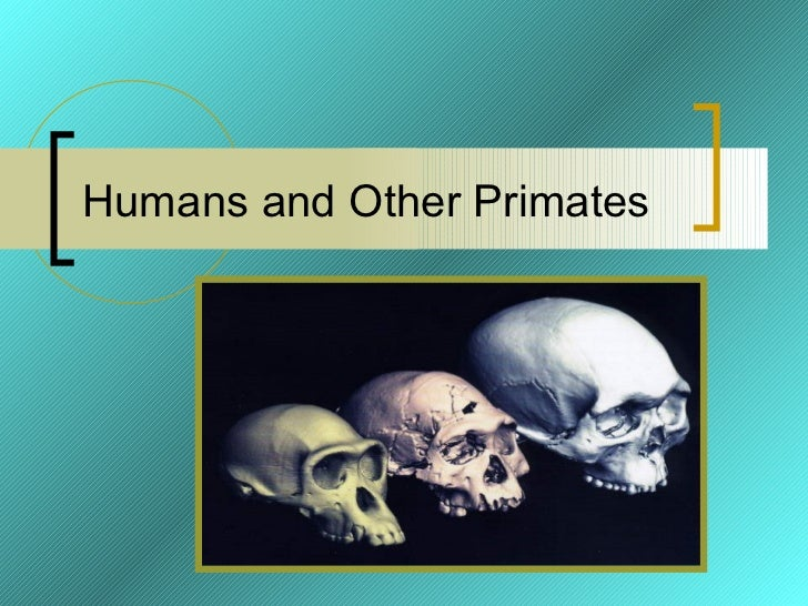 Humans and Other Primates