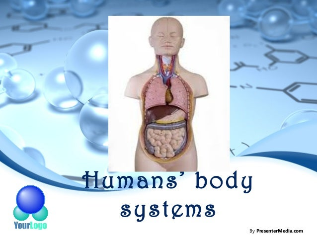 Humans' body  systems           By PresenterMedia.com