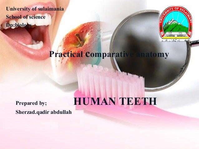 Human teeth 2