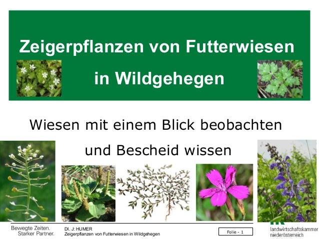 Zeigerpflanzen von Futterwiesen in Wildgehegen Wiesen mit einem Blick beobachten und Bescheid wissen  DI. J: HUMER Zeigerp...