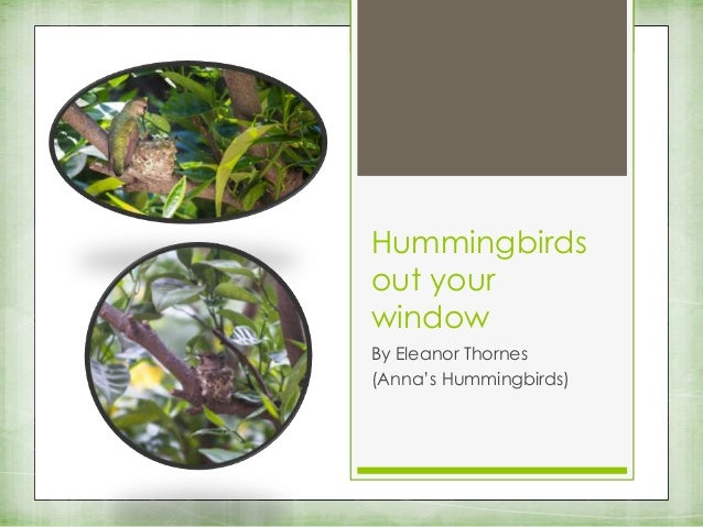 Hummingbirds out your window