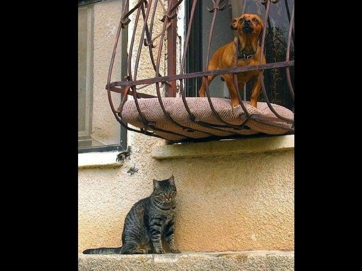 Hund und-katze