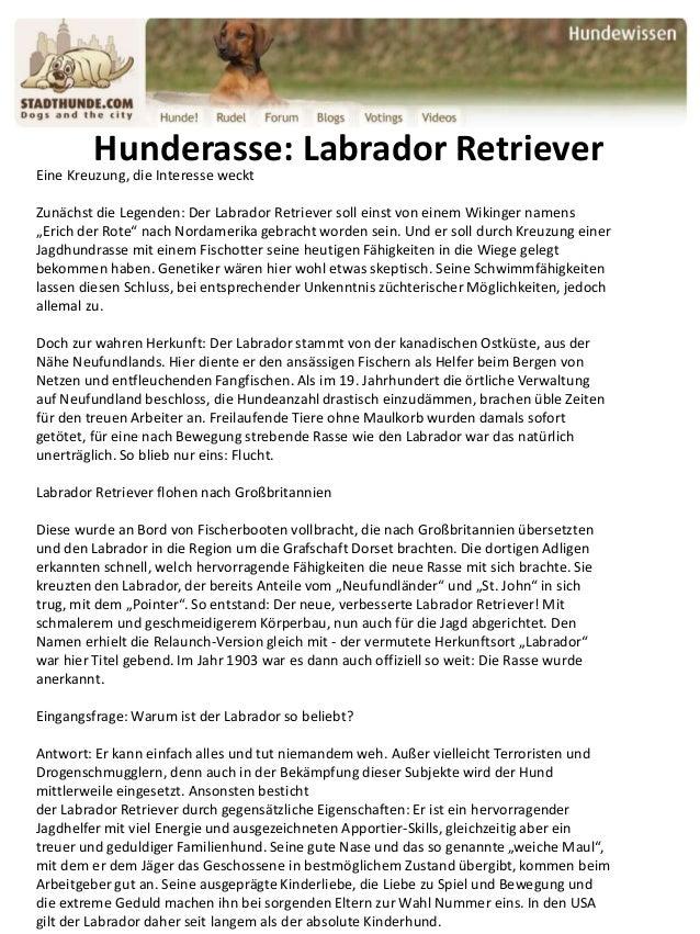 Hunderasse: Labrador Retriever Eine Kreuzung, die Interesse weckt Zunächst die Legenden: Der Labrador Retriever soll einst...
