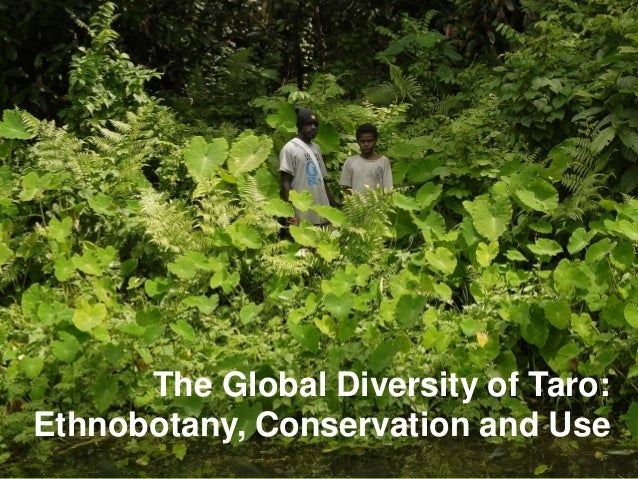 The Global Diversity of Taro: Ethnobotany, Conservation and Use