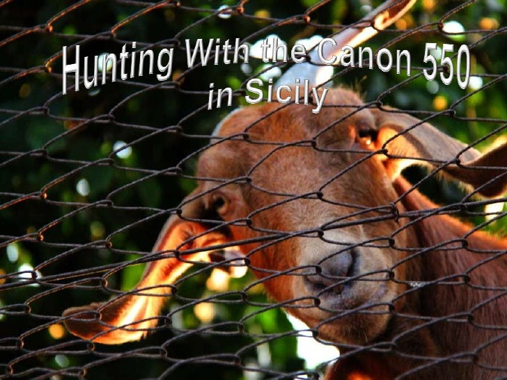 Hunting With the Canon 550 <br />in Sicily<br />