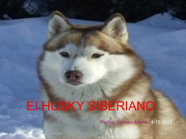 EI HUSKY SIBERIANO Pelayo Correas Alvaré 4-12-2013