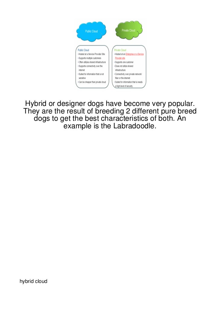 Hybrid or designer dogs have become very popular. They are the result of breeding 2 different pure breed   dogs to get the...