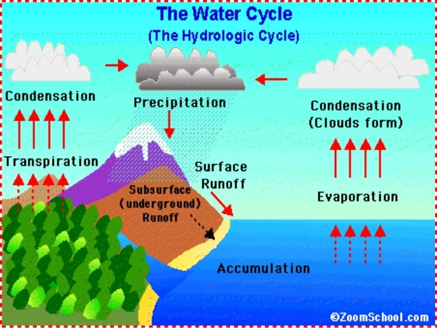schematic representation of photosynthesis with Simple Water Cycle Diagram For Kids on Modelling Approaches To Inform The Control And Management Of Invasive Seaweeds besides Full in addition Diagram Of A Tomato Plant moreover 1364788 furthermore Diagram Soil Types.