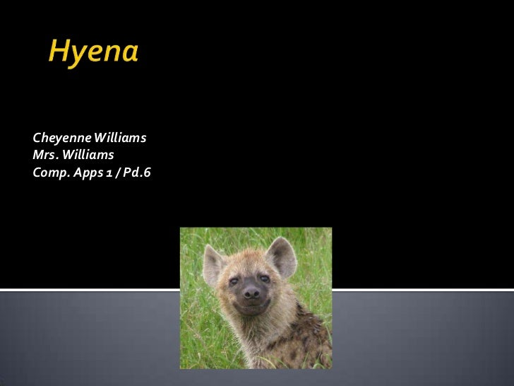 Hyena by cheyenne williams
