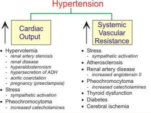 Prednisone hypertension mechanism