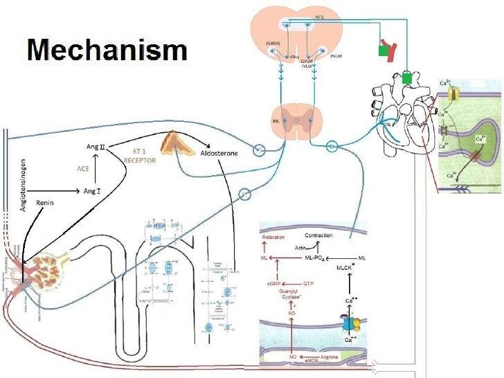 Cialis Mechanism